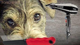Линька у собак | Когда начинается | Причины.(, 2015-12-25T05:26:34.000Z)