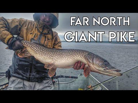 Canadian Wilderness Fly-In Fishing   Pike & Walleye