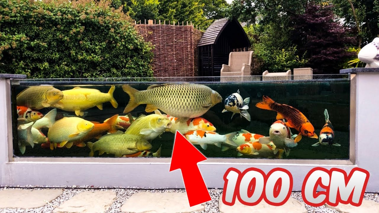 Garden Designs Epic Backyard Koi Ponds With Glass Youtube