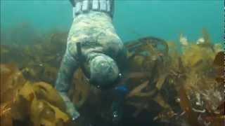 spearfishing fiordland new zealand