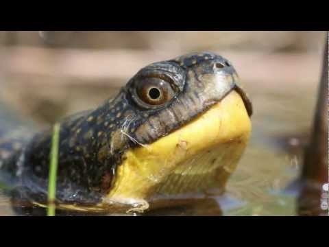 Long Point Basin Land Trust - Help Reptiles - Make your Pond Turtle Friendly