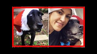 | Dog Rescue StoriesDying Dog Who Never Lived Inside Enjoyed His Final Days, Thanks To An Amazing...