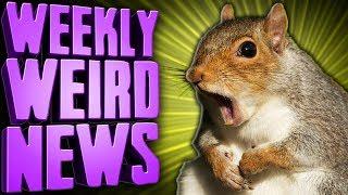 fugitive-attack-squirrel-on-meth-framed-weekly-weird-news
