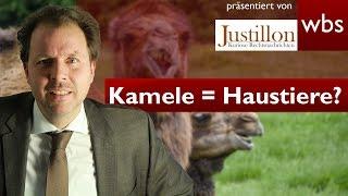 Vom Kamel gefallen – Sind Kamele nützliche Haustiere? | Rechtsanwalt Christian Solmecke