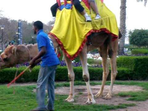 Dubai Safa Park Mom on Camel