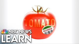 NBC News Learn: The Science of the Tomato thumbnail