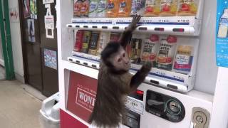 Мартышка покупает себе сок