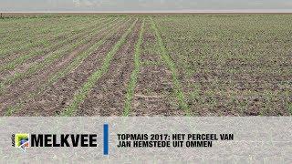 Topmais 2017: Het perceel van Jan Hemstede uit Ommen - www.melkvee.nl
