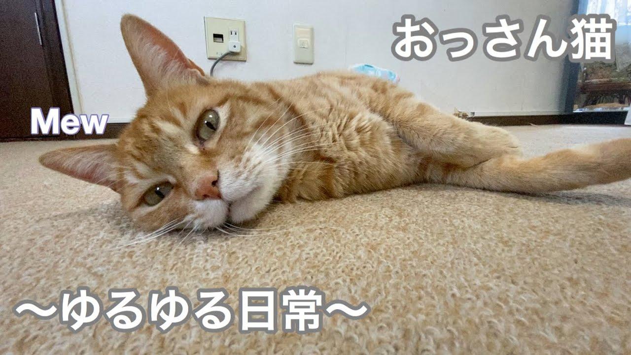 の の たるみ お腹 猫