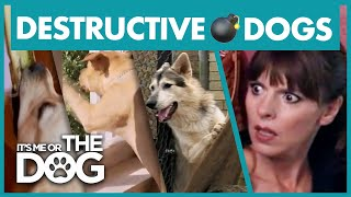 The Most Destructive Dogs | Best of It's Me or the Dog