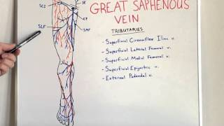 Great Saphenous Vein - Anatomy Video for Medical Students - USMLE Step 1