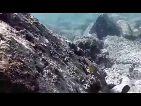 Aruba: Snorkling Adventures