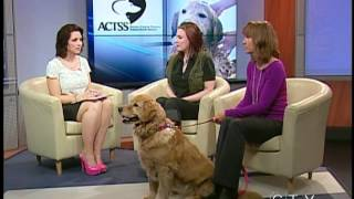 Inspiring Story Of A Dog Overcoming Cancer - Ctv Edmonton (april 10, 2012)