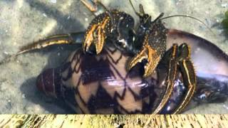 What Do Hermit Crabs Eat | The Things That Hermit Crab   Pet Owners Need To Understand