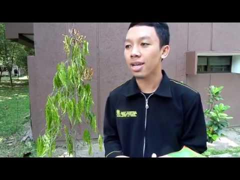 Lembaga Dakwah Kampus Universitas Negeri Malang