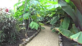 Zone 6 Subtropical Garden - 2014
