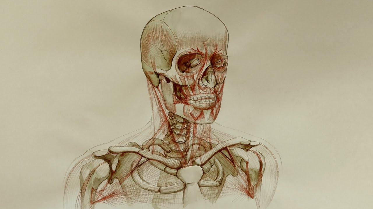 Head Neck And Shoulders Muscles Anatomy Master Class Youtube