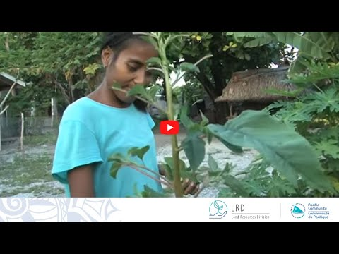 Abaiang Atoll: Building on Organic Traditions