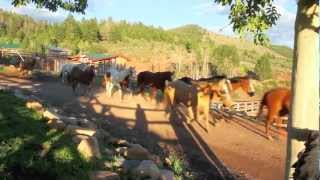 Best Colorado Dude Ranch! - Black Mountain Ranch - McCoy, CO