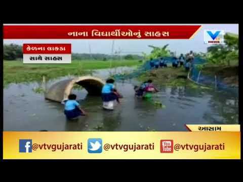 In absence of bridge, these Assam kids swim daily to reach school; Video Gone Viral | Vtv News