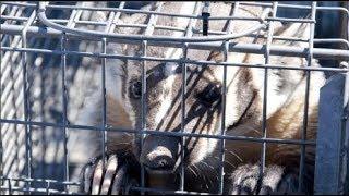 Đằng sau những sản phẩm từ lông động vật là tội ác không thể tha thứ