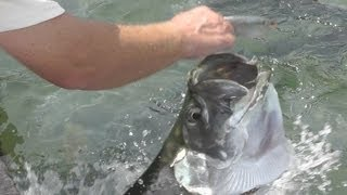 HAND FEEDING the TARPON at Robbies Marina Islamorada in the Florida Keys- GoPro Underwater Video HD