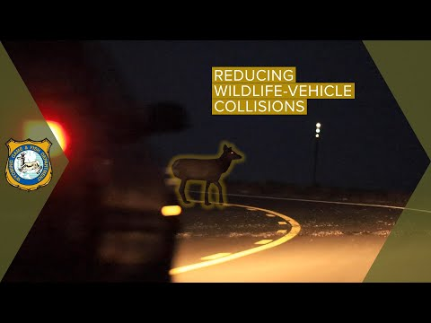 Preventing Wildlife Collisions