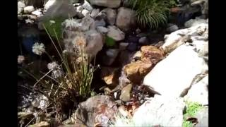 Fish By Design pond streams and waterfall