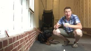 How To Muzzle A Dog That Will Bite You
