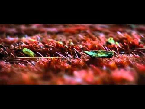 twilight-:-chapitre-4---révélation-2ème-partie-(2012)---le-réveil-de-bella
