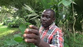 Medicinal Plants at Aburi Botanical Gardens - Ghana May 2018 Tour