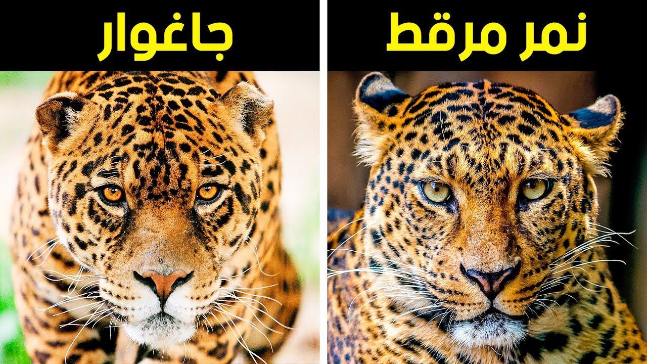 24 حيوانا غالبا ما يصعب التمييز بينها