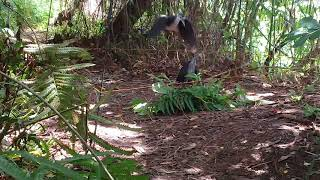 ครืนแขวนนกกวัก 40 บ่วงหมุนได้ สนใจติดต่อT. 0638716539
