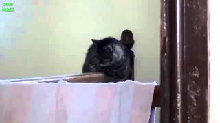 Смешные падения кошек!