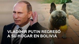 Encuentran a Vladímir Putin tras un mes de búsqueda en Bolivia