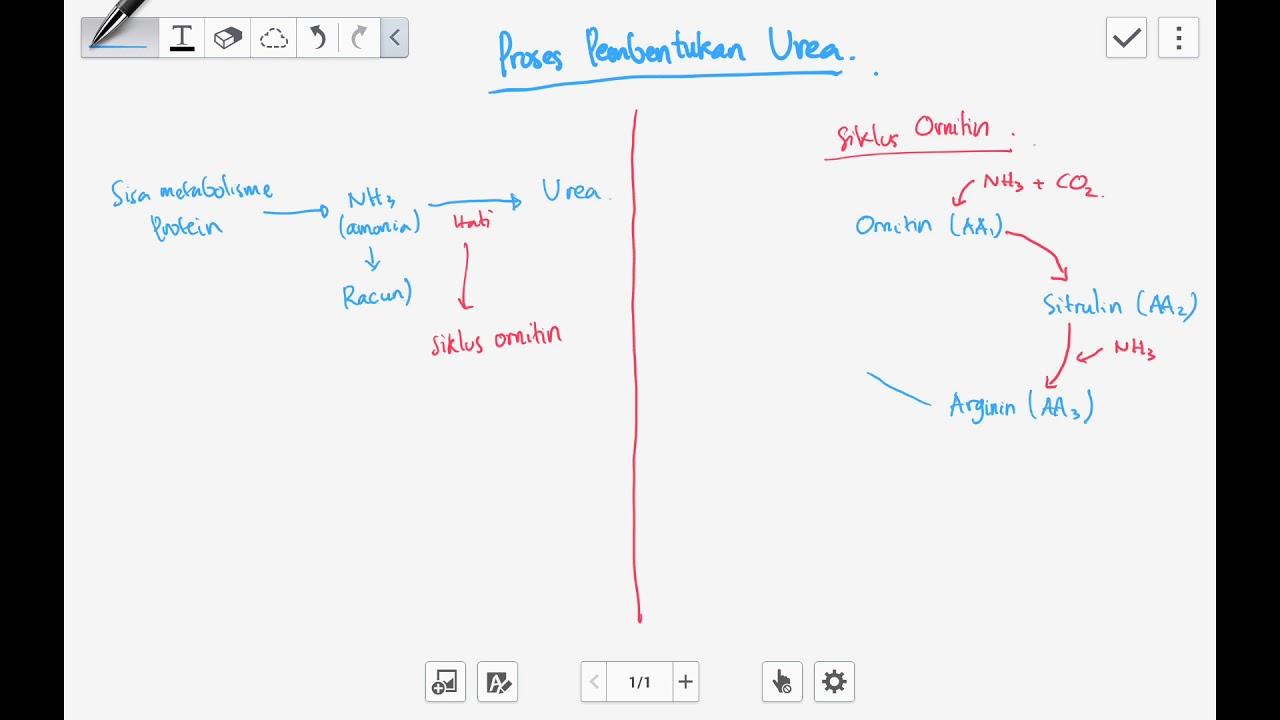 Siklus Ornitin