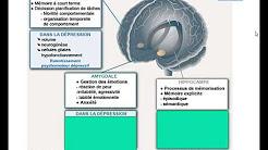 Le trouble dépressif entre le biologique et le psychologique