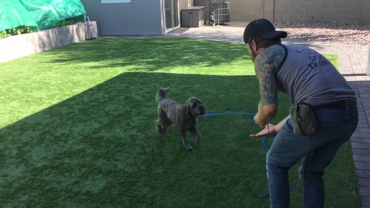 how to train my dog to play fetch