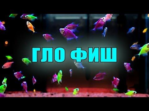 GloFish | Гло Фиш (Глофиш) : рыбки нашего магазина