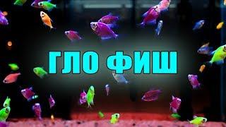 GloFish   Гло Фиш (Глофиш) : рыбки нашего магазина