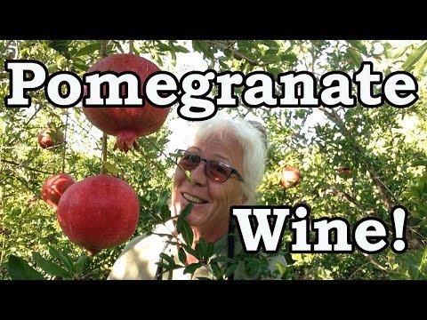 Living in Turkey, How To Clean Pomegranates and Make Them Into Wine