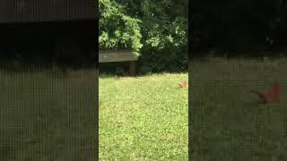 Duman av peşinde  angry bird 😉