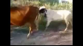 Fuck with animals Don't fuck animals - Blink182 - Dammit (cover).MP4 Must watch Bakra kick