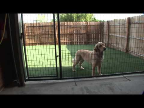 the-pet-ranch-video-tour