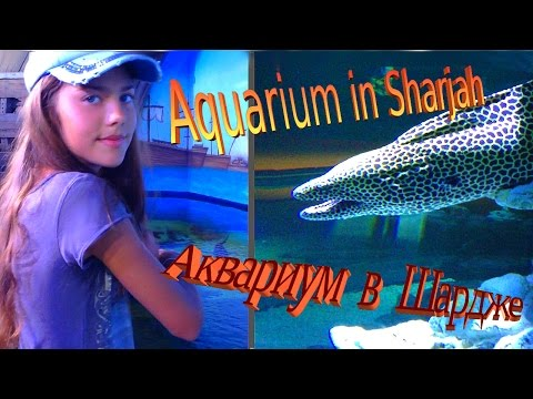 Аквариум в Шардже / Путешествия / Эмираты. Aquarium in Sharjah / Travels / Emirates