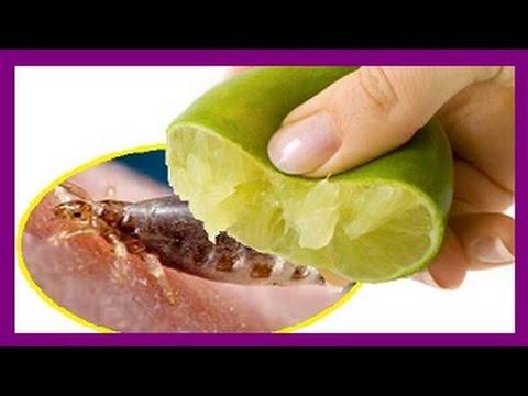 Como eliminar los piojos con limón remedio casero con limón