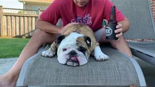 Reuben the Bulldog: He's Home! It's the Weekend!