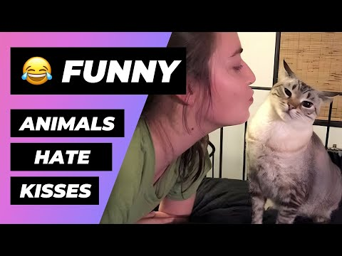 Animals Hate Kisses 🔴 Funny Cats And Dogs Hate Kisses - Perros y Gatos Odian Los Besos