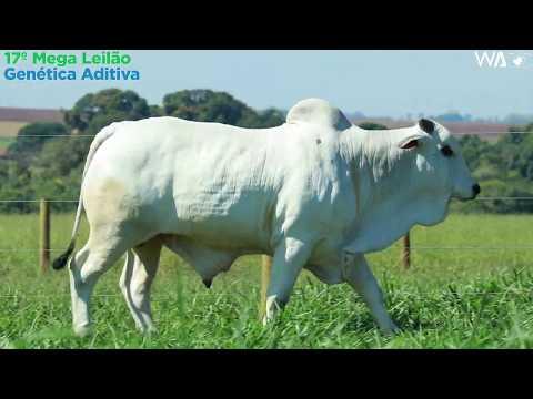 LOTE 77  - REMC A 1967 - 17º Mega Leilão Genética Aditiva 2020