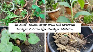 Root Vegetables And Flowers That Can Be Grown In May.